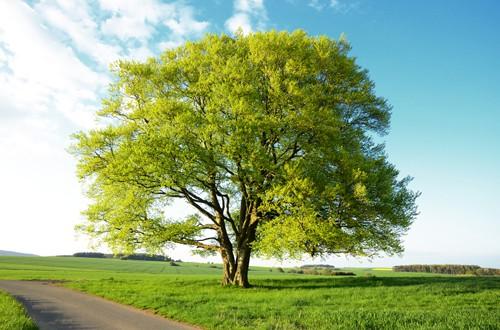 Arbor Day