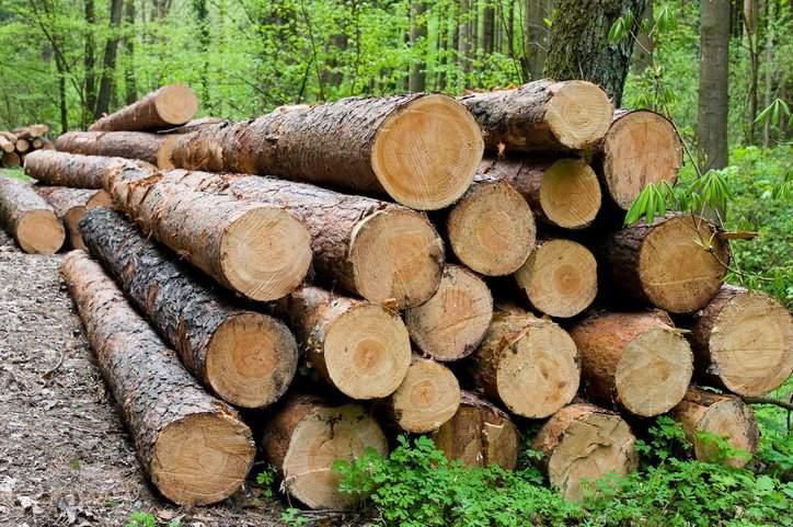 Stack of chopped logs that can be sourced with ASTM forensic fiber analysis.