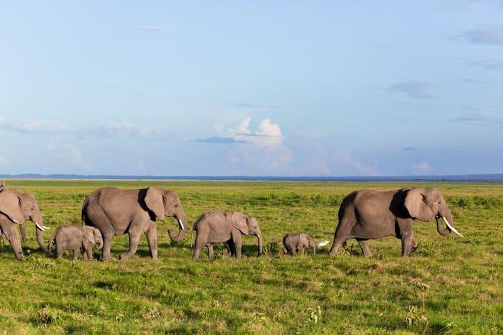 International Ban on Domestic Ivory Markets IUCN