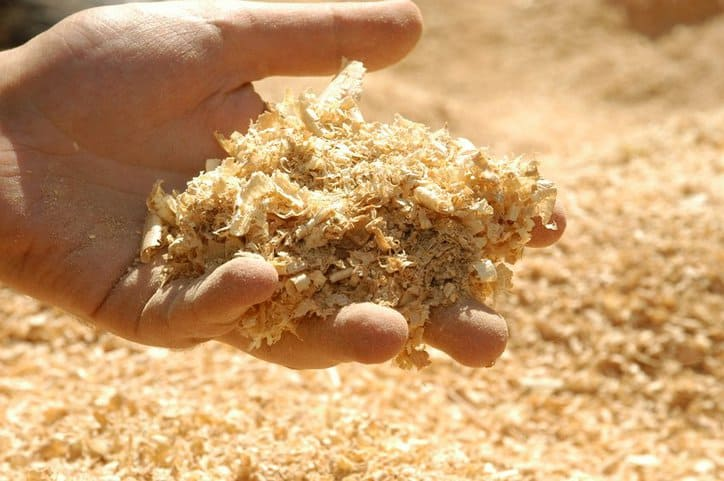 Loose wood chips held in hand to support craft pulping process featuring slaked lime.