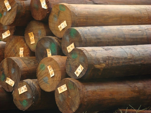 Wood poles chopped down and stacked