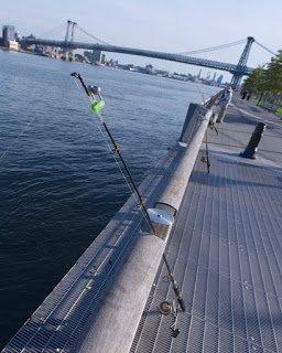 East River Estuary Fish