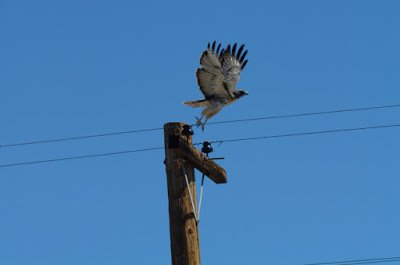Prevention of Bird-Related Power Outages