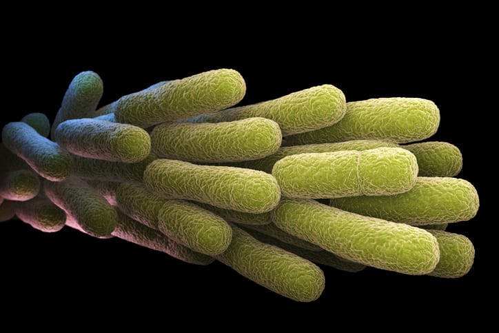 Legionella that are covered by ANSI ASHRAE 188 2018