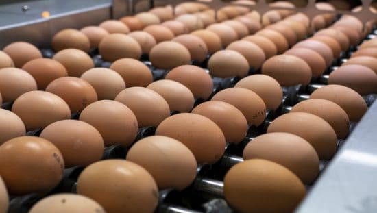 Eggs preparing for FSMA Certification Body Accreditation for imported food safety audits.
