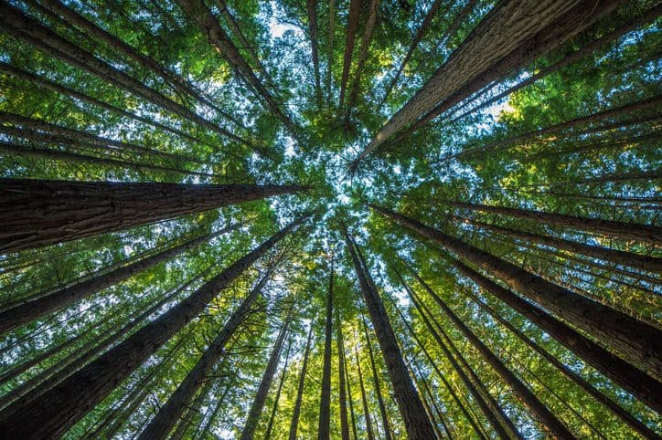 Trees reach to the sky when the world provides credible carbon disclosures for validation and verification bodies.
