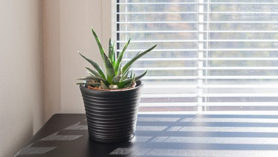 Succulent near window with acceptable indoor air quality following ANSI/ASHRAE 62.1-2019