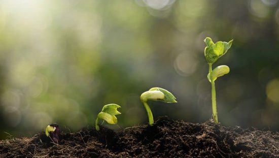 Even the smallest green plant, or enterprise, can sprout with an ISO 14001:2015 Environmental Management System.