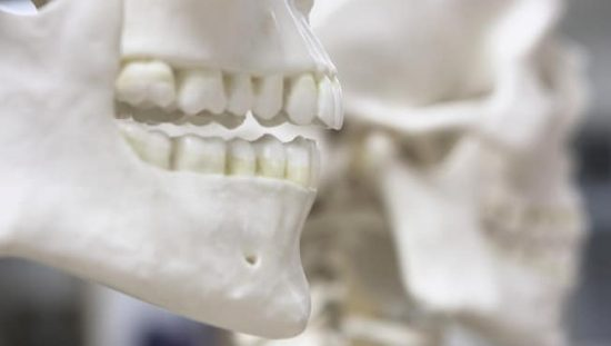 Closeup of two classroom skeletons being examined via the ANSI/ADA 1058-2010 (R2015) - Forensic Dental Data Set.