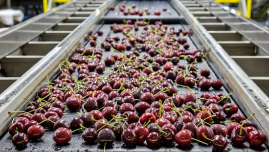 Cherries rolling in conveyor as food safety management systems return to normal with ISO 22000 accreditation.
