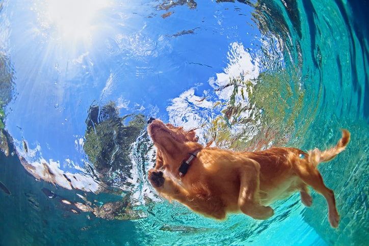 Dog swimming in a pool kept safe with NSF/ANSI 50-2020 equipment and chemicals.