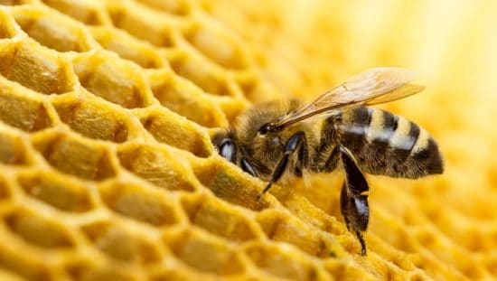 Bee dips into honeycomb, a shape used for lightweight cores in aerospace 3D printing.