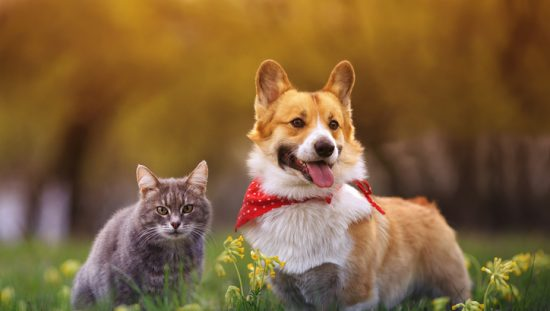 A gray tabby cat and corgi happy to know that 3D printing cold help them with potential defects.